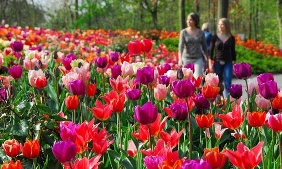 Hotel ad Amsterdam, la città dei tulipani