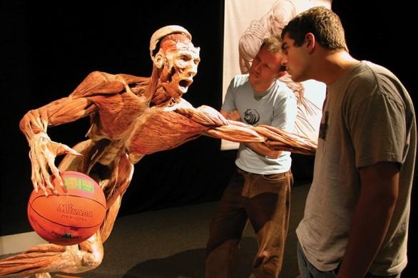 V_basketballer1-586x390